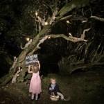 Beware of squirrels, Alex Randall lights, photographs Claire Rosen