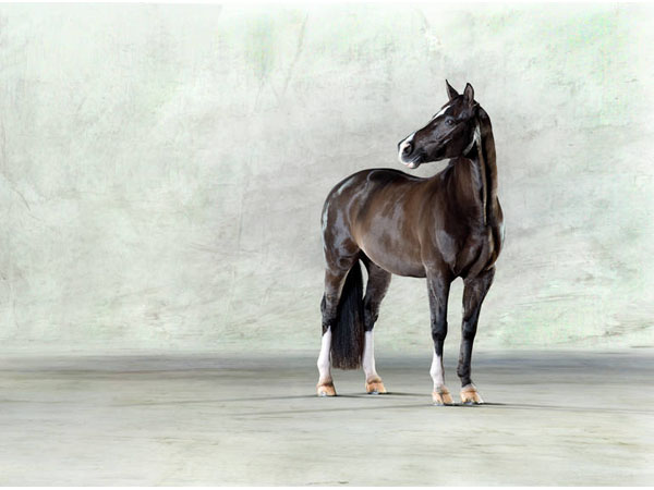 Valegro ll from Saatchi Art